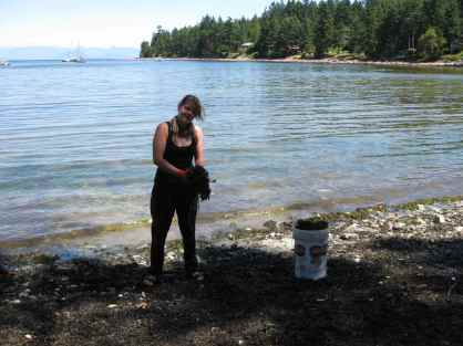 Swiss WWOOFer, Zita, Collecting Kelp