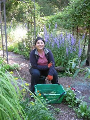 Chilean WWOOFer Liza Weeding