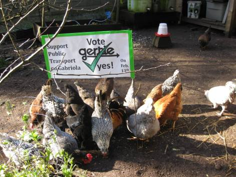 My Flock Supporting The 'Yes' Vote in The Referendum