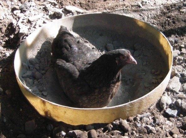 Dust Bath Bowl