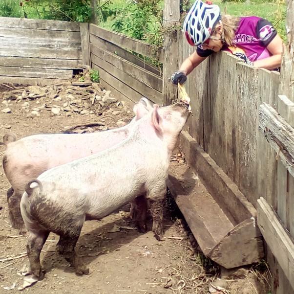 Biker Chick & Pigs