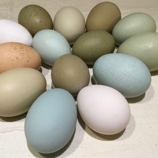 cropped-jan16-eggs3.jpg
