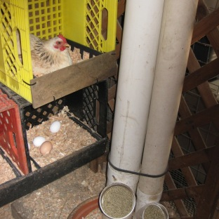 Homemade Nest Boxes & Feeders
