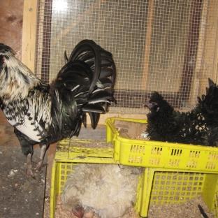 Milk Crate Nest Boxes