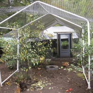 Covered Canopy, Looking Into Back Pen