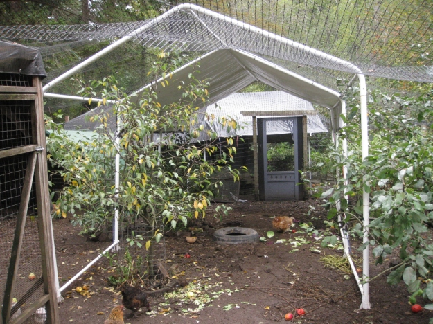 Netted Car Shelter (Main Pen)