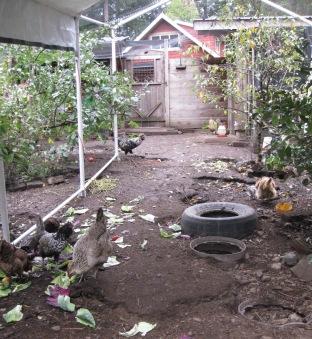 Dust Bathing Area
