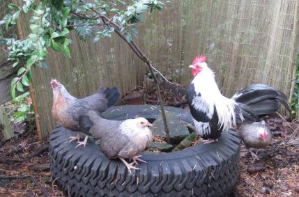 OEG Flock