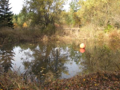 Jeff & Rachel's Pond