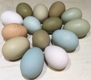 Jan16 eggs4