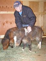 Dave With Mini Horses