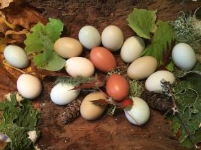 Mixed Egg Basket