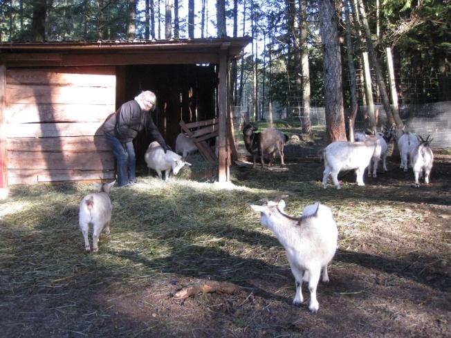 Taylor & Goats