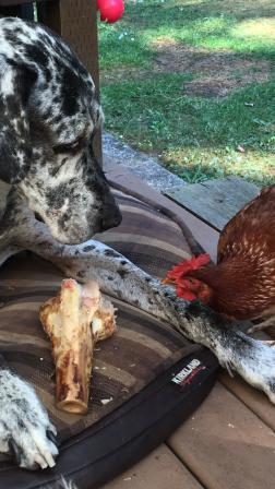 Monty & Hen