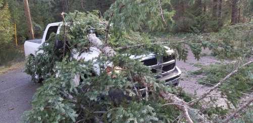 truck:tree