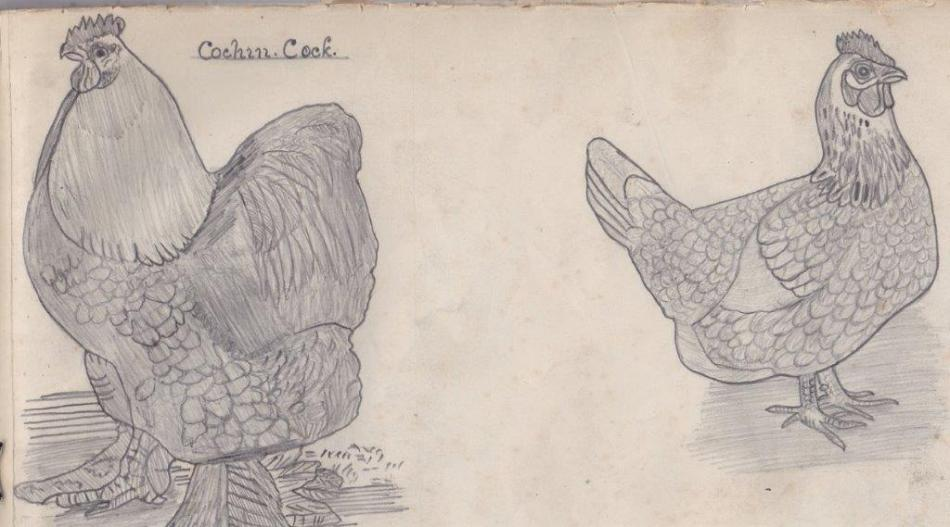 Cochin Cock and Hen