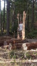 em & wood