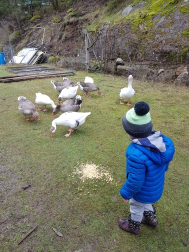 Grandson With Geese