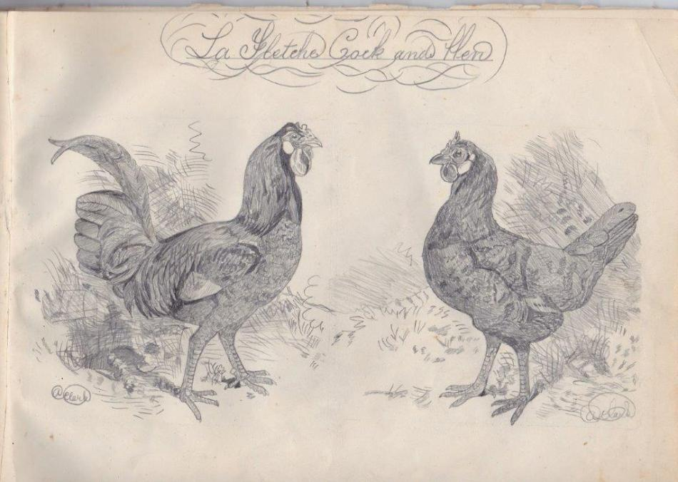 la fleche cock and hen