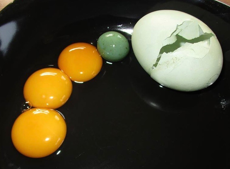 3 yolks, 1 fart