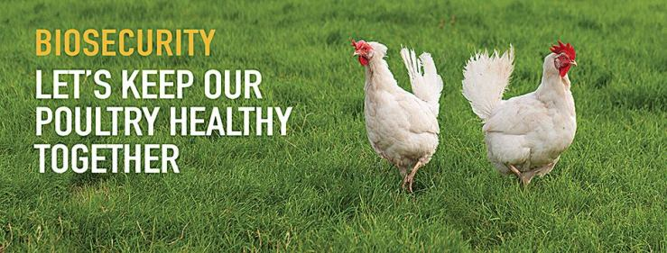 Let's Keep Our Poultry Healthy