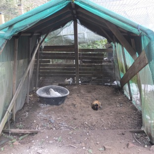 Sheltered Area With Dustbath