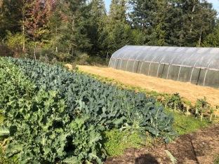 garden & polytunnel
