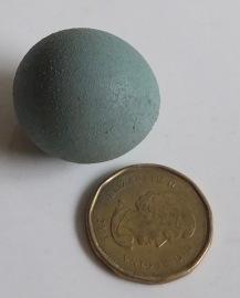 Ameraucana x Fart Egg