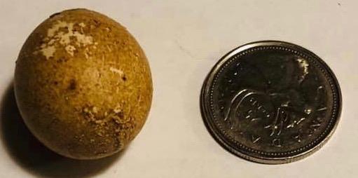 Fart Egg