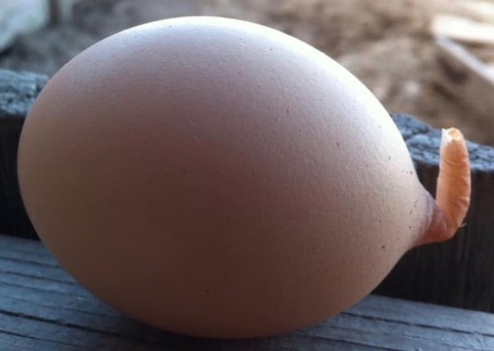 Egg With A Tail