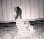 Raccoon & Auto Door