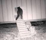 Raccoon & Auto Door