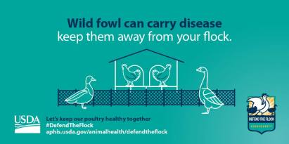 Wild Fowl Carry Diseases