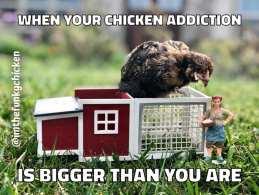 Chicken Addiction Bigger Than You