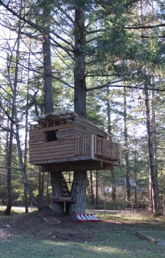Derek's Tree House