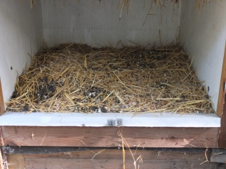 Droppings Box Under The Roost Bars