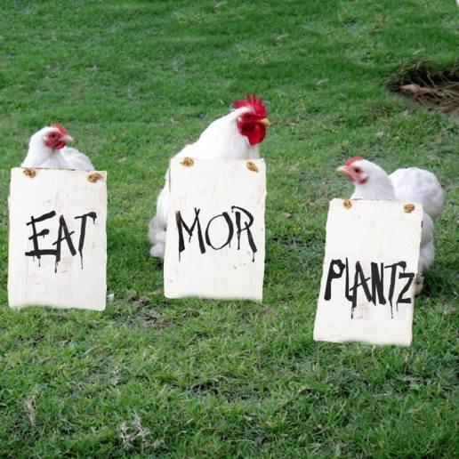 Eat Mor Plantz (Credit: Humane League)