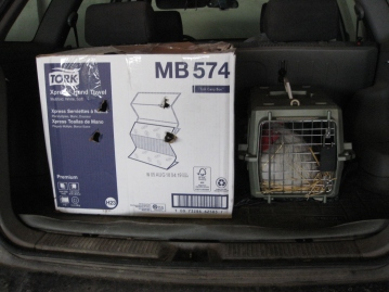 Chickens In My Car