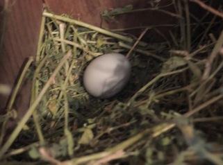 Pixie's Egg