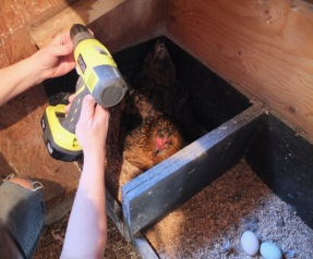 Tracy Drilling In the Nest Box