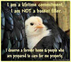 Chick Lifetime Committment