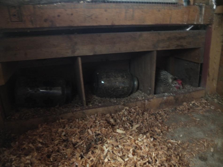 Shona In Nest Box