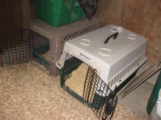Maternity Crates