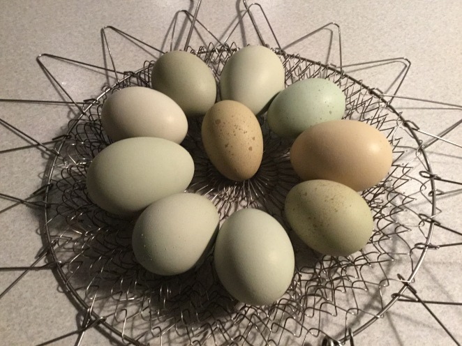 Olive Eggs