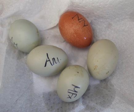 Post-Float Test Eggs
