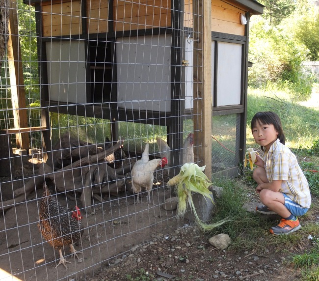 Josh Feeding Chickens