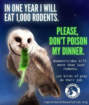 Owls & Rodenticides