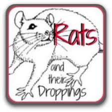 Rats And Their Droppings