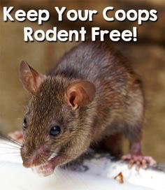 Keep Your Coops Rodent Free