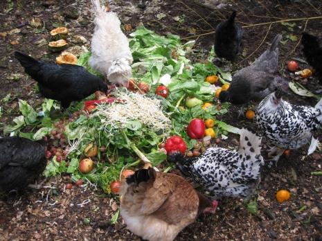 My Flock With Veggies